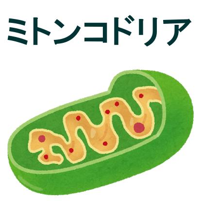 ミトコンドリアと不妊